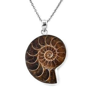 Wire Wrap Ammonite Fossil Necklace on Silver Chain